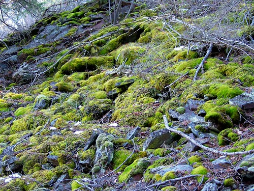 Burgess Lake moss