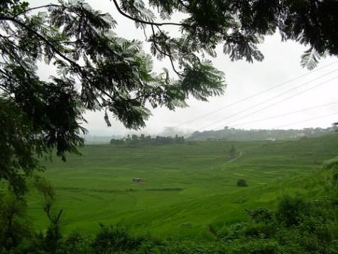 Campos de arroz en el Valle de Kathmandú