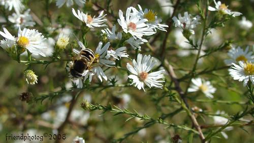 Bee edit - sig