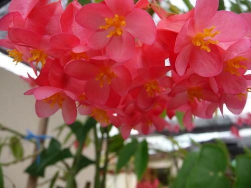 cantik kan bunga ni?