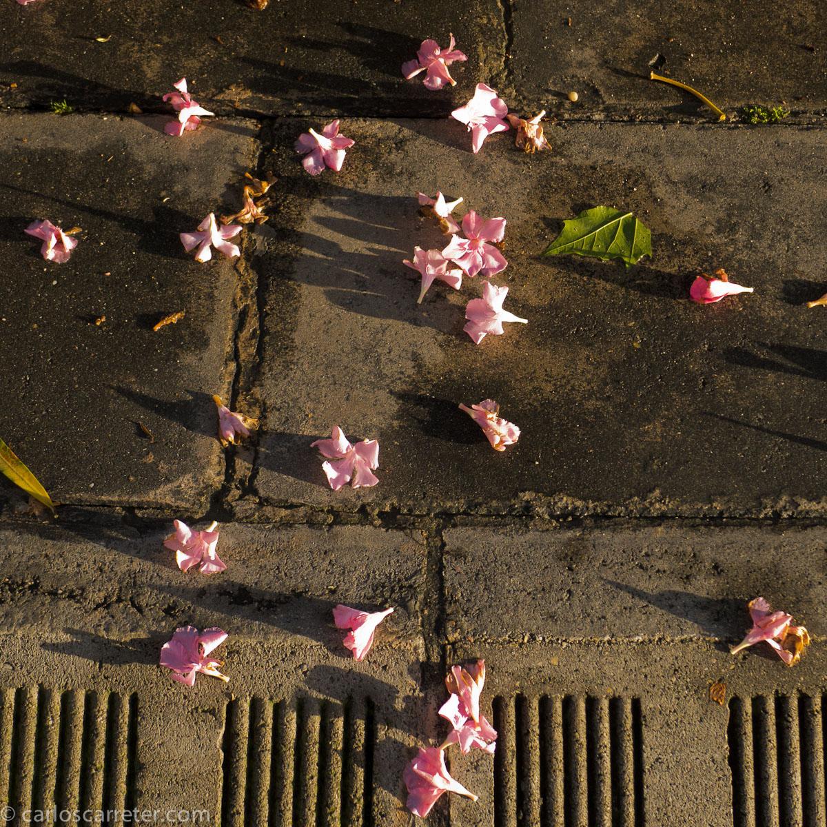 Flores caídas