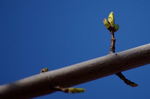 03.18.2011 Buds