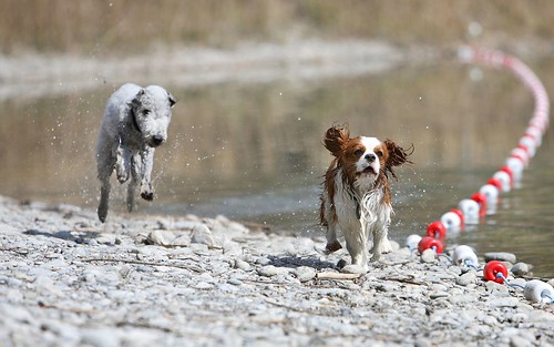 Hunde in Aktion por Dagonator