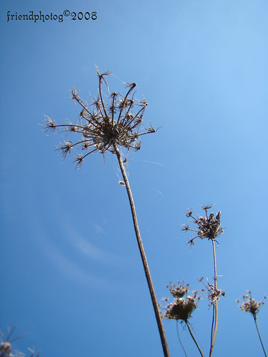 Weeds 4 - sig