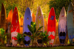 Maui Dreams - Surfboard Fence