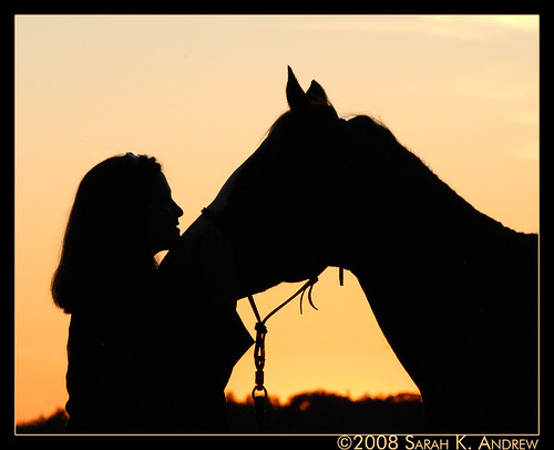 The Bond Between Horse and Human
