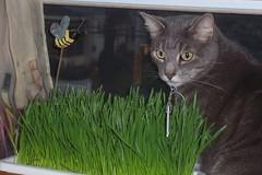 Ernie's grass