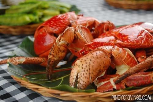 Coconut Crab in Sabtang Batanes