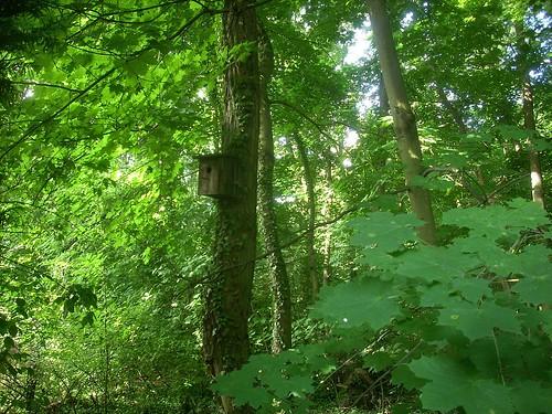 Fledermauskasten im Wald