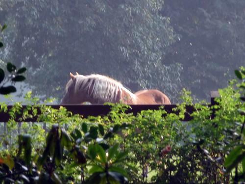 Paardehoofd