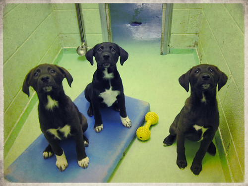 P8 Puppies-