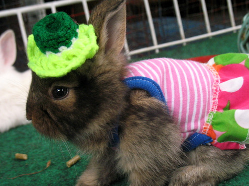 bunny wearing outfits