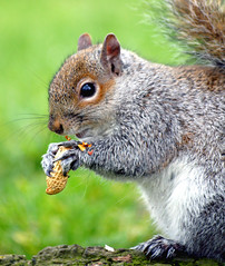 The Squirrels are back...:O)))