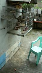 PRIVATE_typhoon frank_birdcage