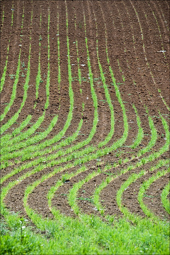 Grass and dirt pattern on farm