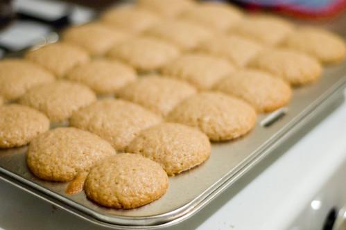 donut muffins (by bookgrl)