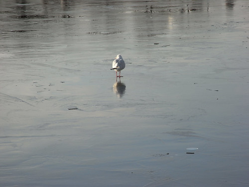 Standing on ice