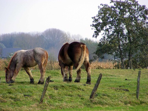 Langs de route...Paarden (4/6)
