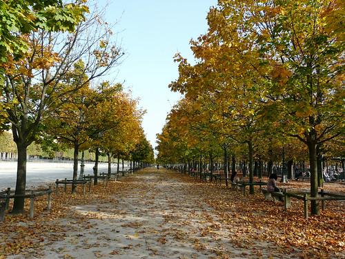 Jardin des Tuileries in Autumn