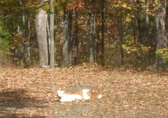Dogs in Leaves