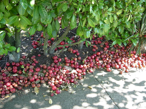 Street apples