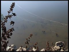 Silk threads - קורי עכביש