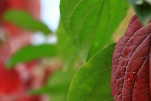Tümpelflora
