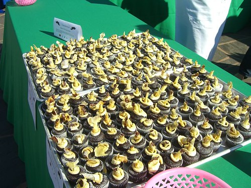 All 200 cupcakes