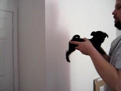 Super Pug! on Vimeo