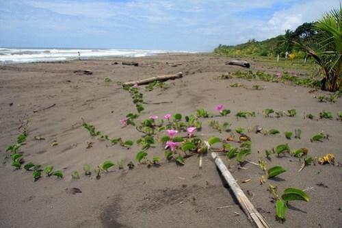 Costa Rica - Día 3 (240)