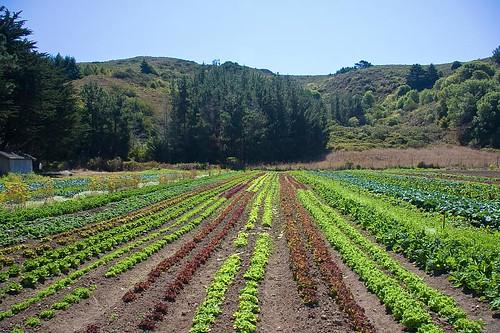 Green Gulch Farm by you.