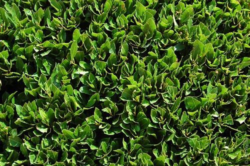 Зеленые листики чего-то там