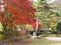 Autumn comes to Nahan-San-Seong