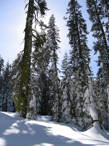 Day 05 - Trees Along The Ski Trail