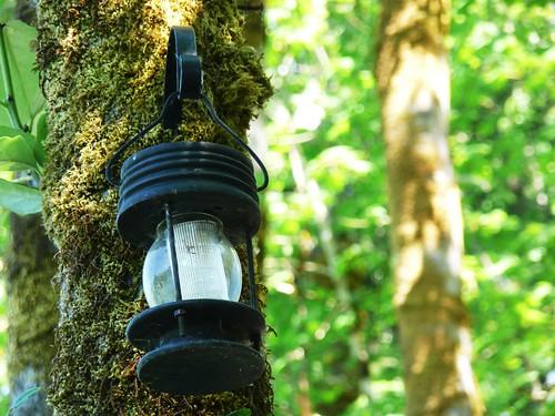 lantern on mossy tree