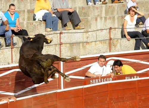 Vaquilla saltando al callejón con suficiente holgura. Foto Pedro Merino