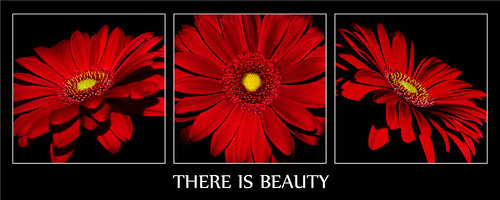 There Is Beauty