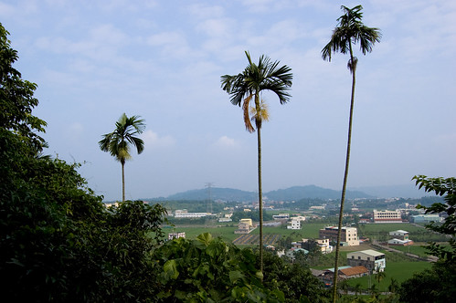 View of Nanpu farms