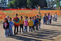 Pulguito Kindergarten Pumpkin Patch