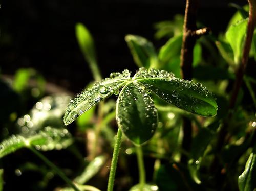Droplets by Jason A. Samfield