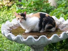 Hattie in the Bird Bath