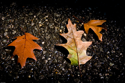 Leaves On Wet Pavement
