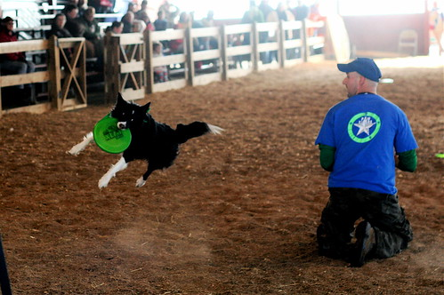 I love the sheep dog contests!