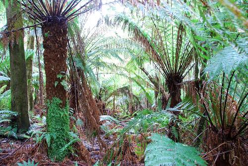Otra imagen del bosque