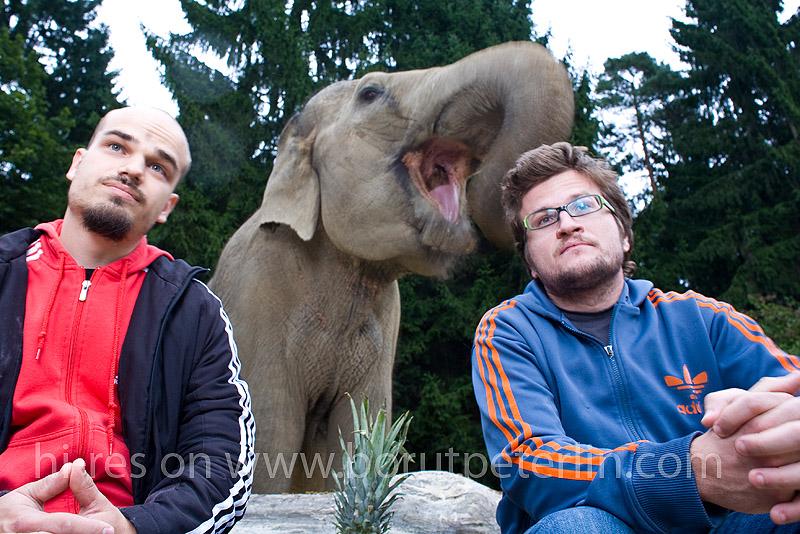 slon in sadež foto borut peterlin 20080916_7350