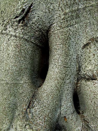 beech holes