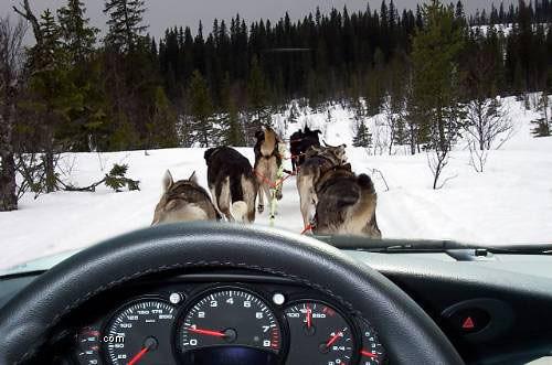 Dog Carriage
