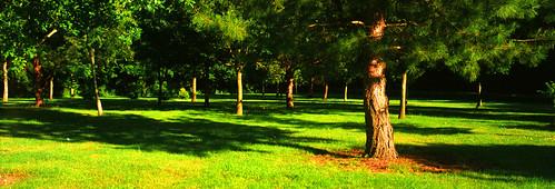 Trees ar good