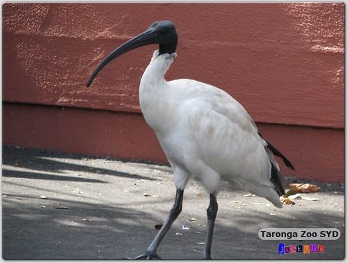 Taronga Zoo - ??