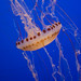 California Trip: Monterey Bay Aquarium (13 October 2008)